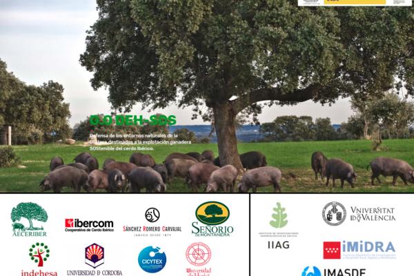 INDEHESA participa en el Grupo Operativo DEH-SOS trabajando en la sostenibilidad de la explotación del cerdo ibérico