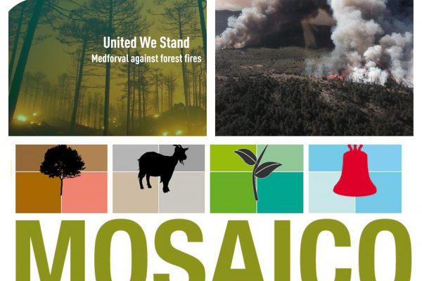 El Proyecto Mosaico: ejemplo de la acción participativa e innovación social en la lucha contra los incendios forestales